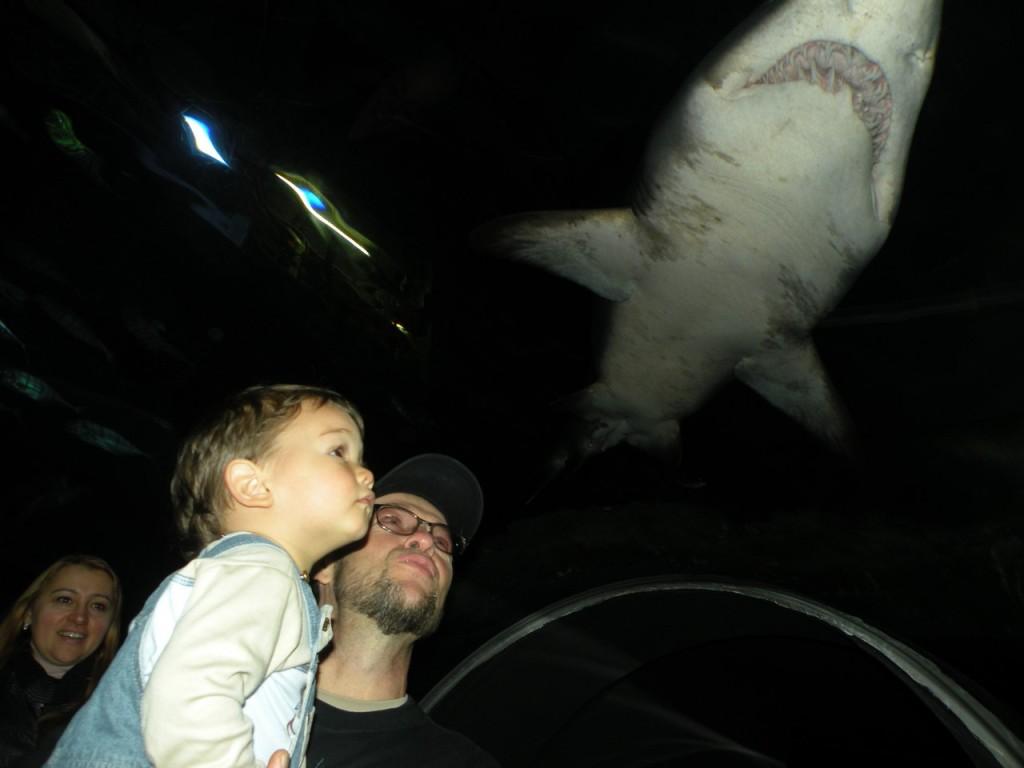 Океанариум Turkua-Zoo Стамбул Турция, экскурсии с маленьким ребёнком