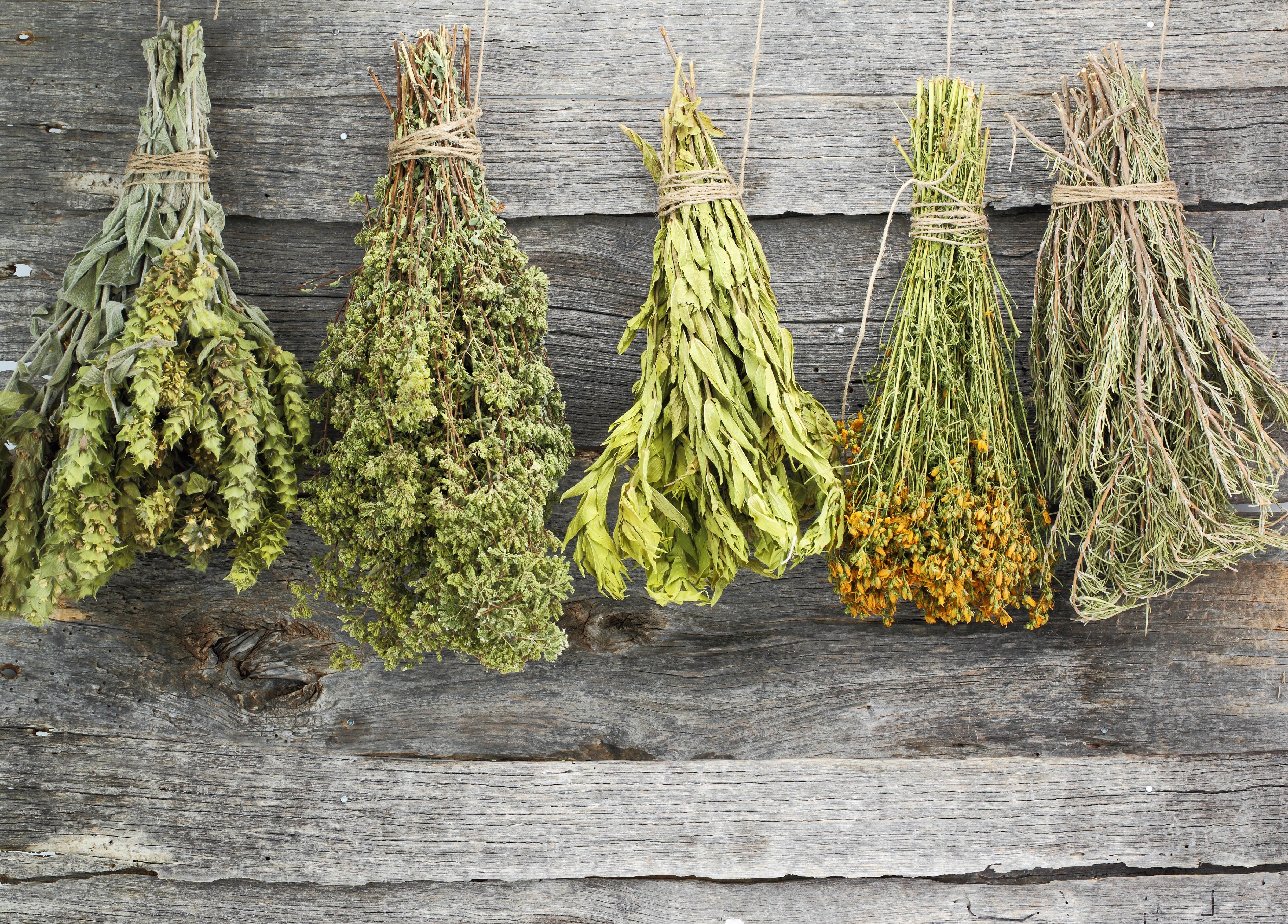 лекарственные травы противоглистное средство, рецепт травяной сбор от глистов детям