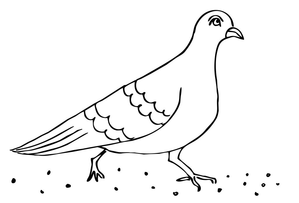раскраска птица голубь