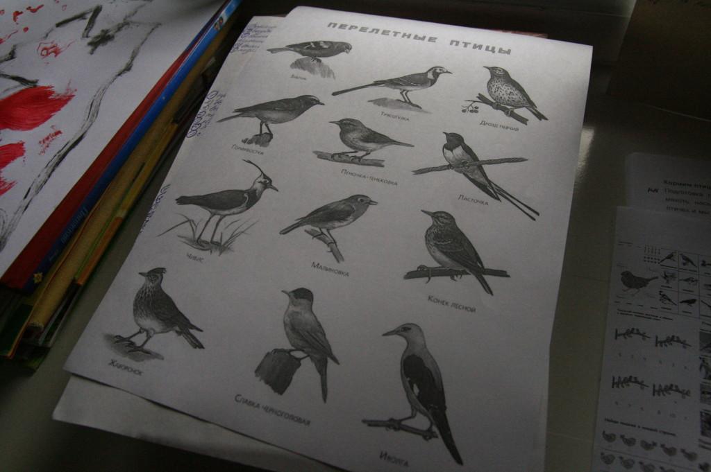 перелётные птицы занятия с ребёнком