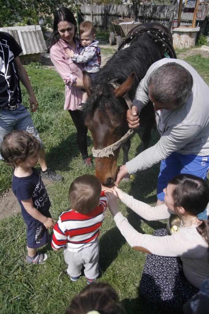 дети кормят лошадь