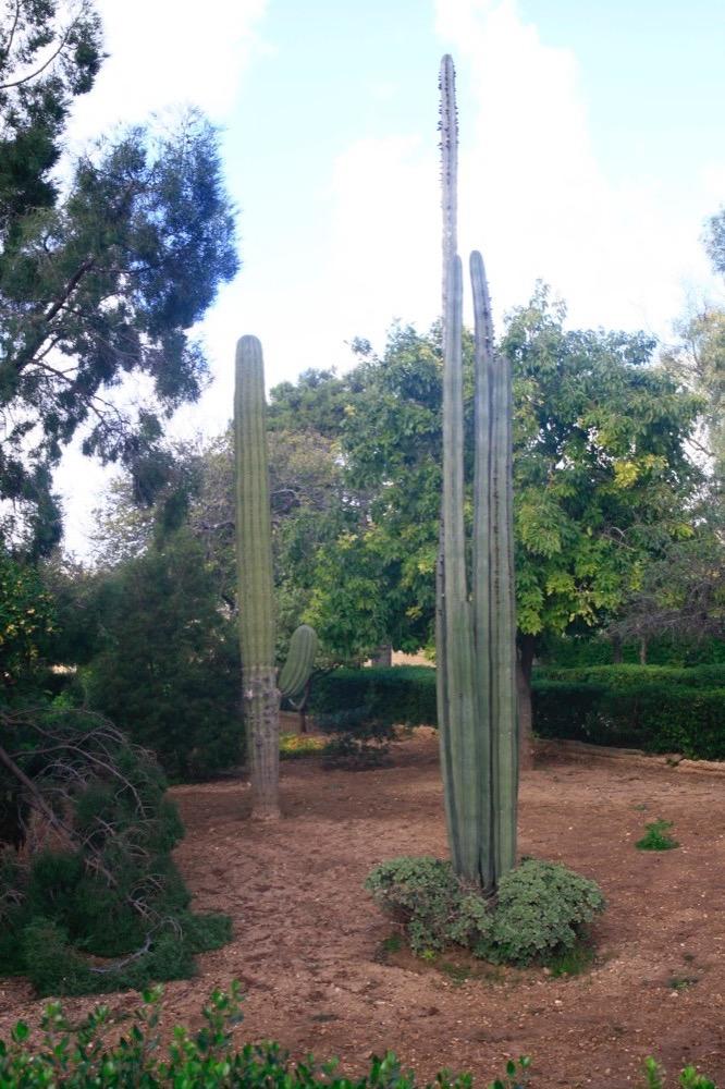 ботанический сад Арготти Мальта