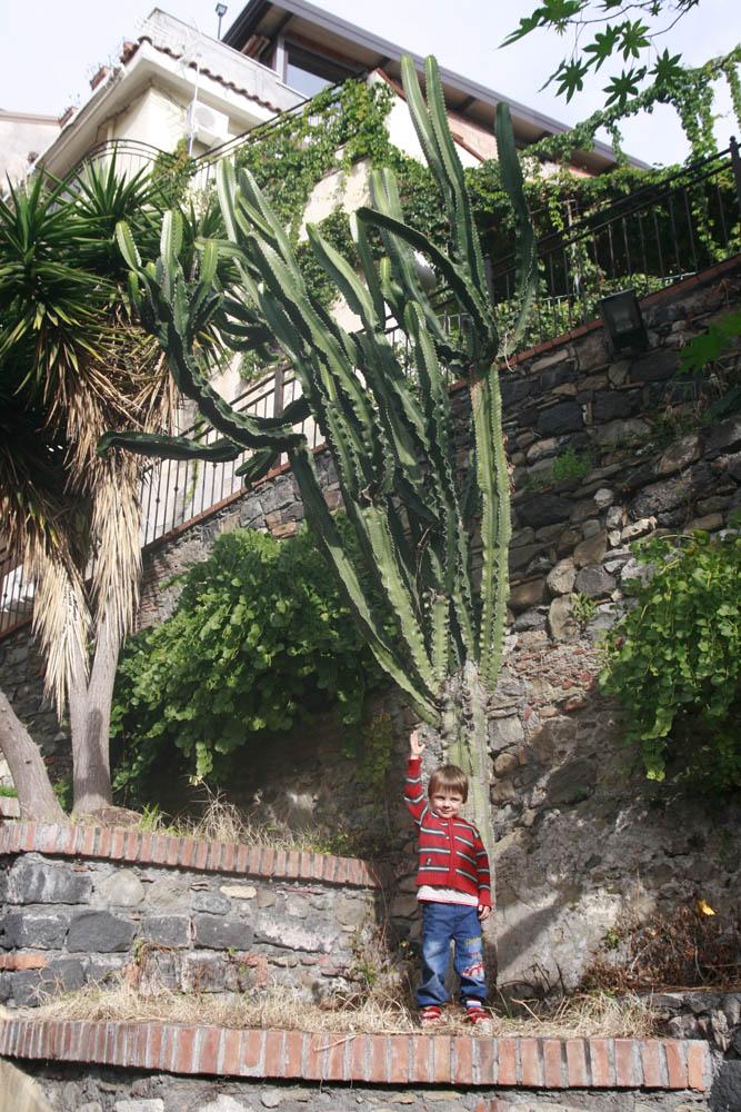 большой кактус