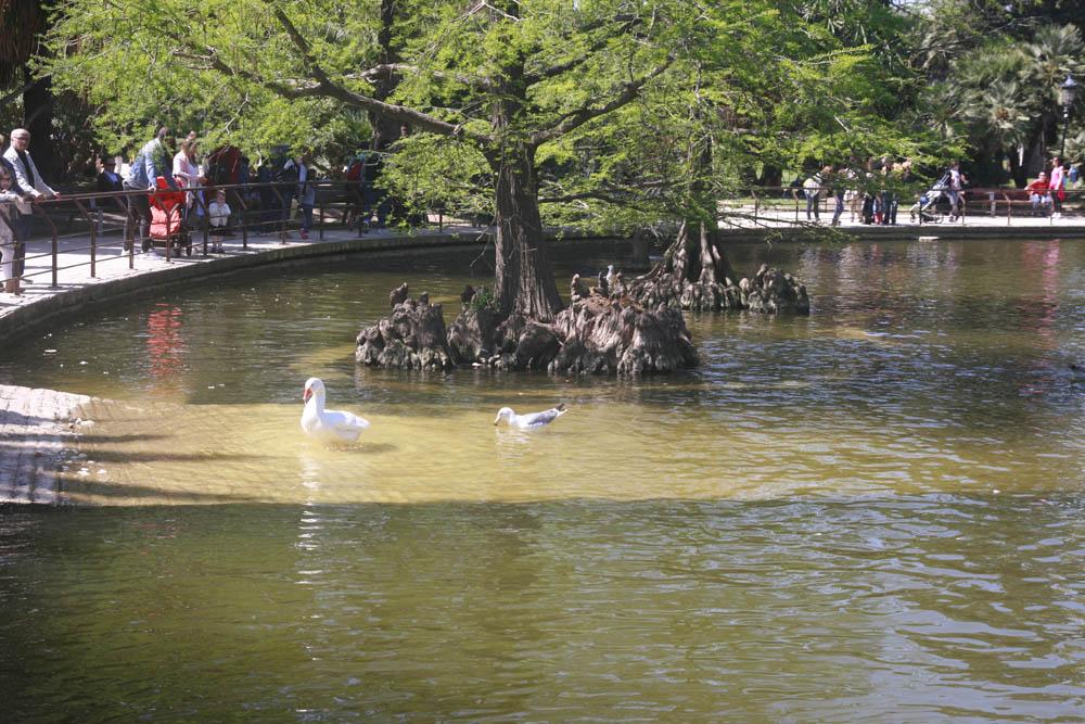 озеро в парке Цитаделли