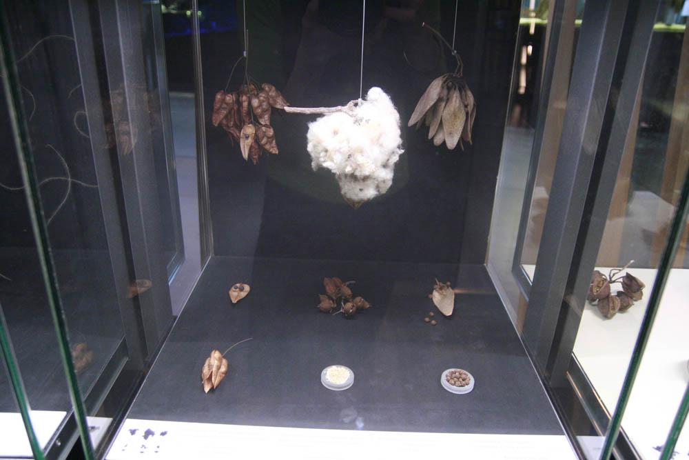 пчелиные ульи в музее