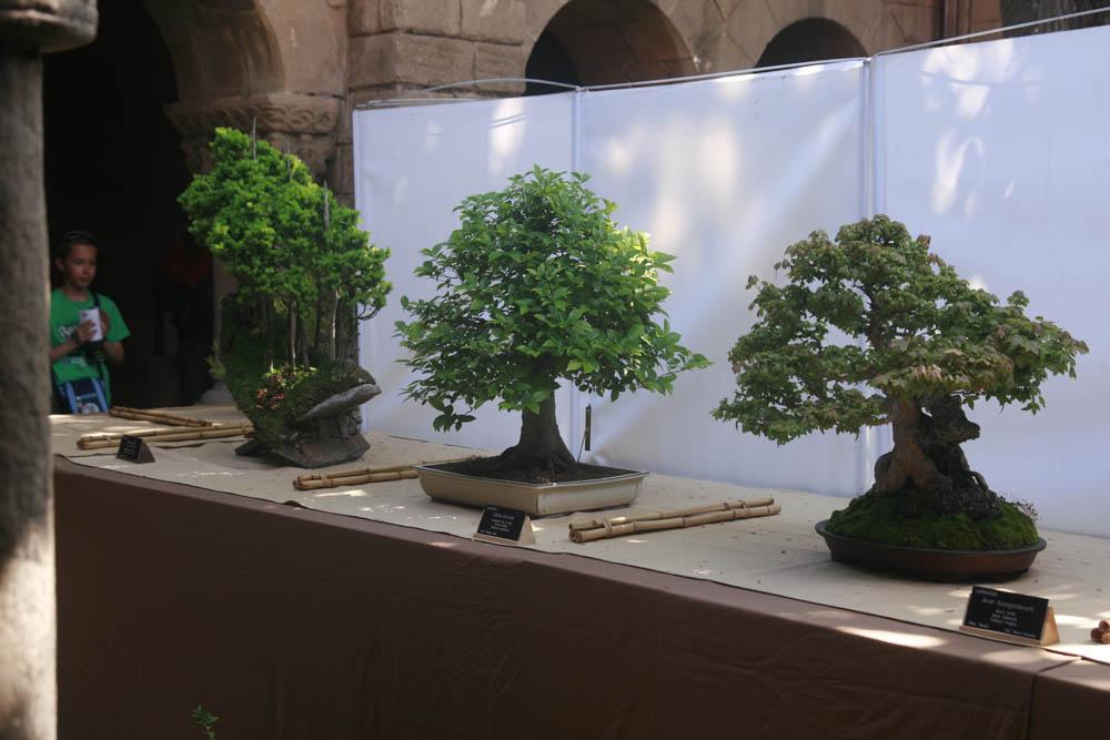 выставка бонсаи