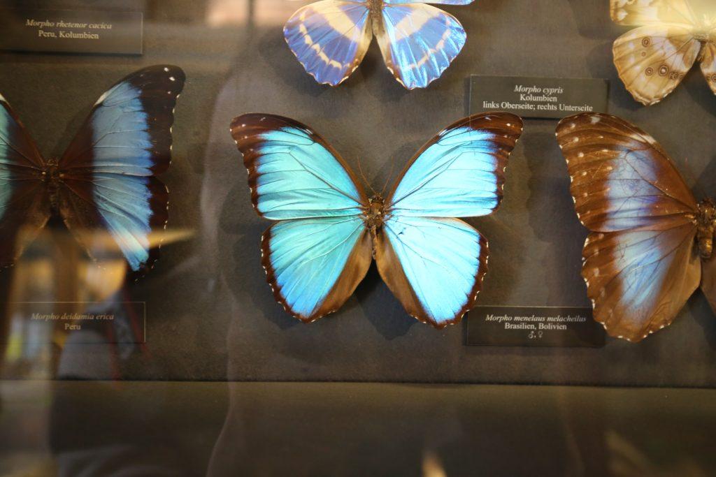 бабочка в музее природы