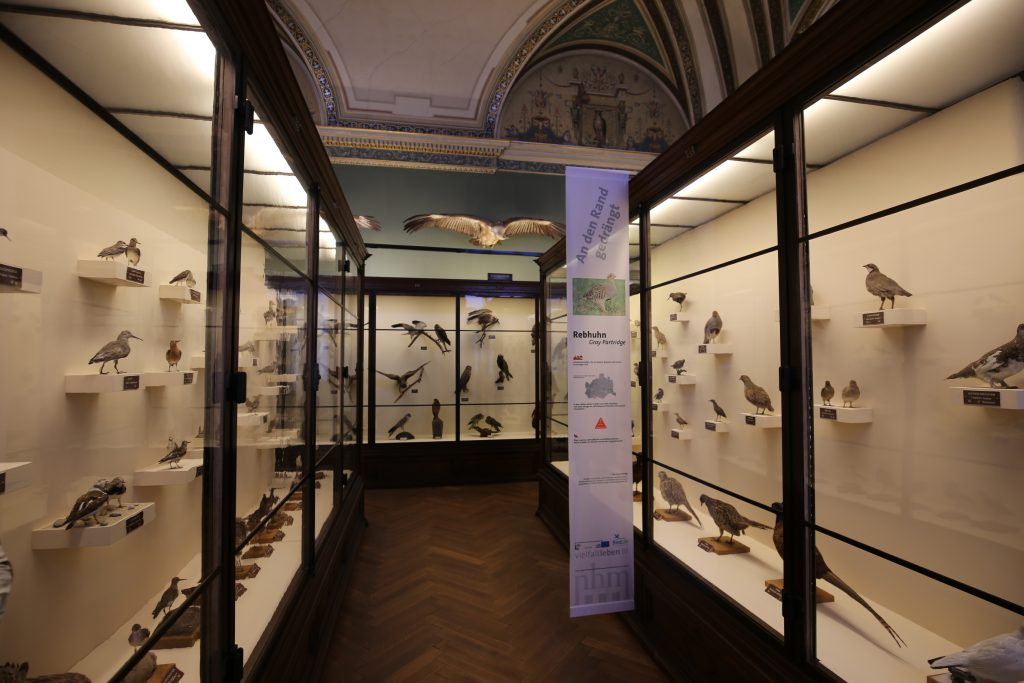 музей природы для детей в Вене