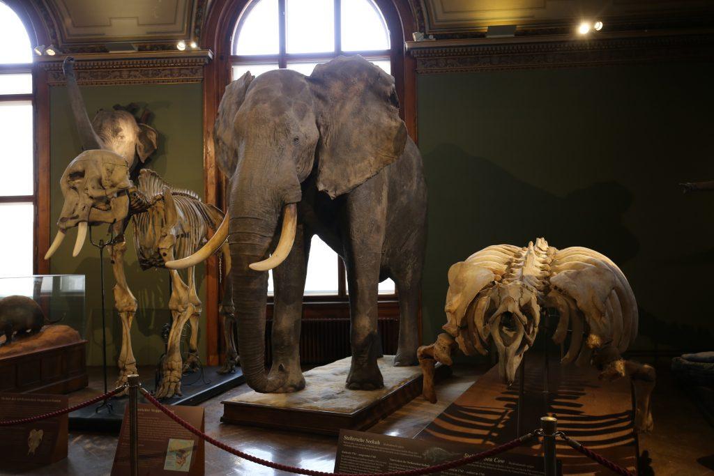 музей природы в Вене